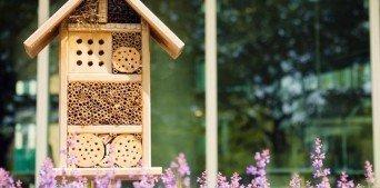 Arılar İçin Otel