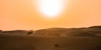 Dünya Sıcaklığındaki Artışın Çevreye Etkileri